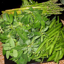 Green Beans, Fresh Fenugreek and Asparagus Are Great for Losing Weight